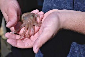 squid-olihně5