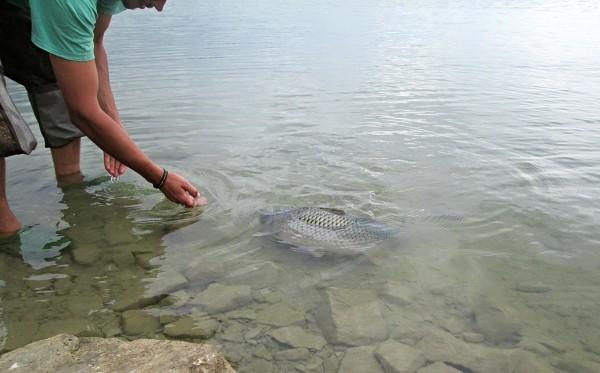 Šetrné pouštění ryby, kapr to často ocení a přijede rybáři poděkovat ...