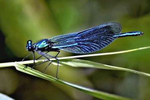dragonfly-vazka-5