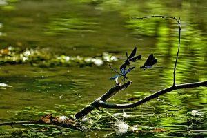 dragonfly-vazka-7