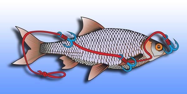 Nastražení ryby do klidné vody - v kombinaci s podvodním splávkem.