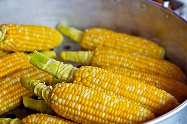 Kukuřice - skvělý rybářský partikl