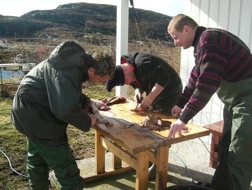 Kuchání ryb - to patří také k rybařine v Norsku