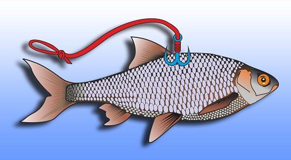 Nástražená rybka na jednom trojháčku - vhodné na štiky