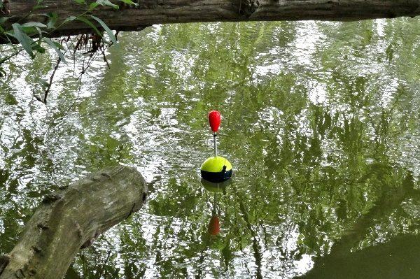 Kačenka na vodě, zavěšená pod špičkou prutu.