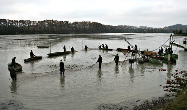 Slov ryb - rybník Broumar v Opočně