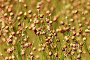 flax-lněné