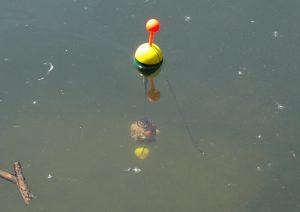 kacenka-krmitko-ve-vode