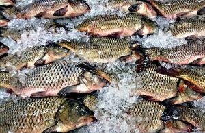fish-zmrazeni-kapri