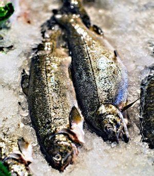fish-zmrazeni-pstruzi
