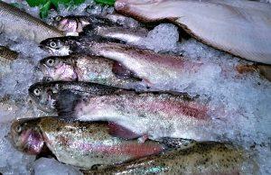 fish-zmrazeni-pstruzi2