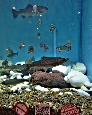 obri-akvarium3