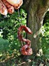 jatra-tomas-pod-stromem-leto
