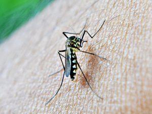 mosquito-komár-repelent