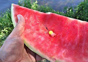 meloun